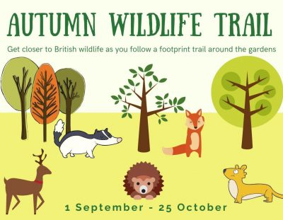 Autumn Wildlife Trail