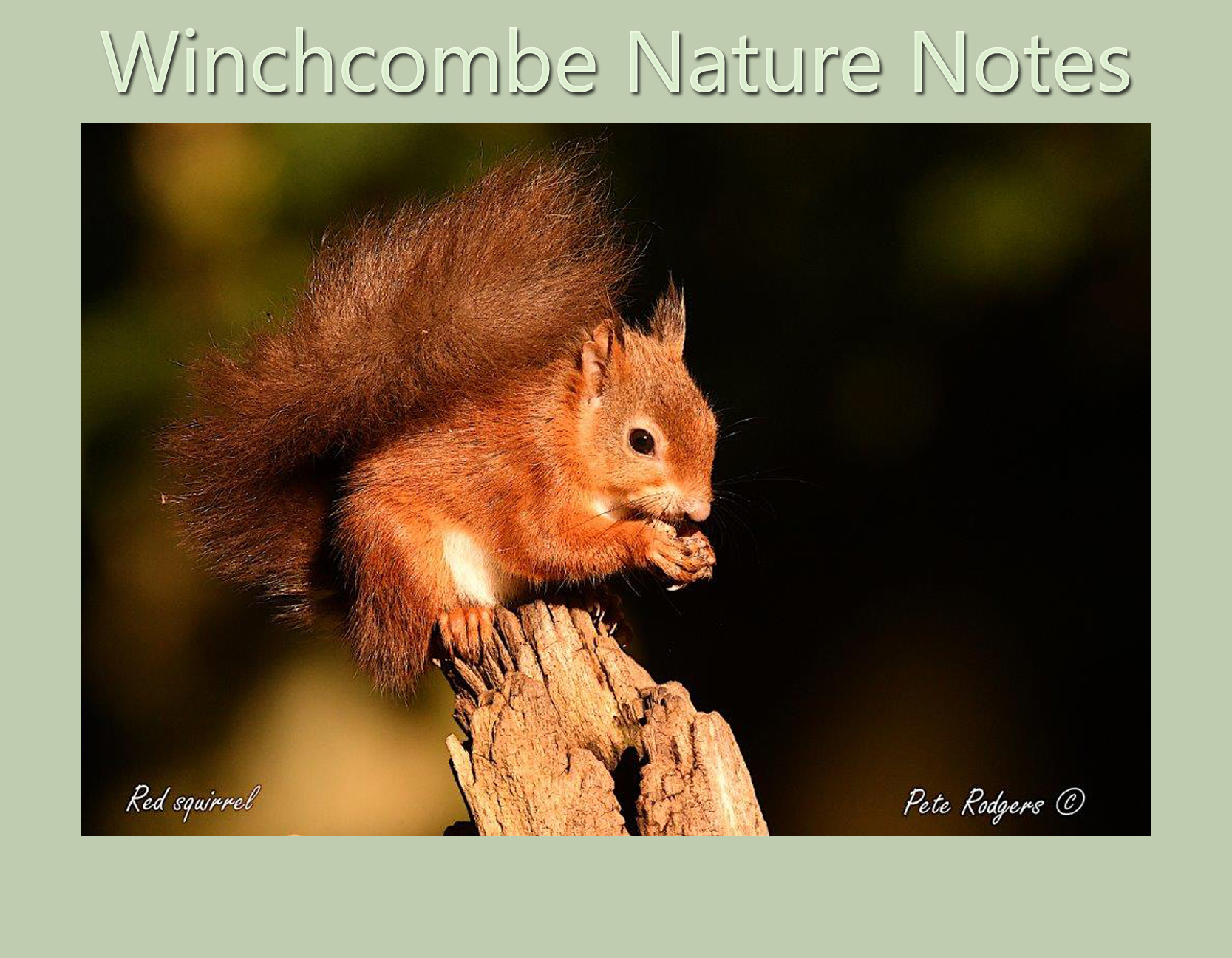 Winchcombe Nature Notes - March