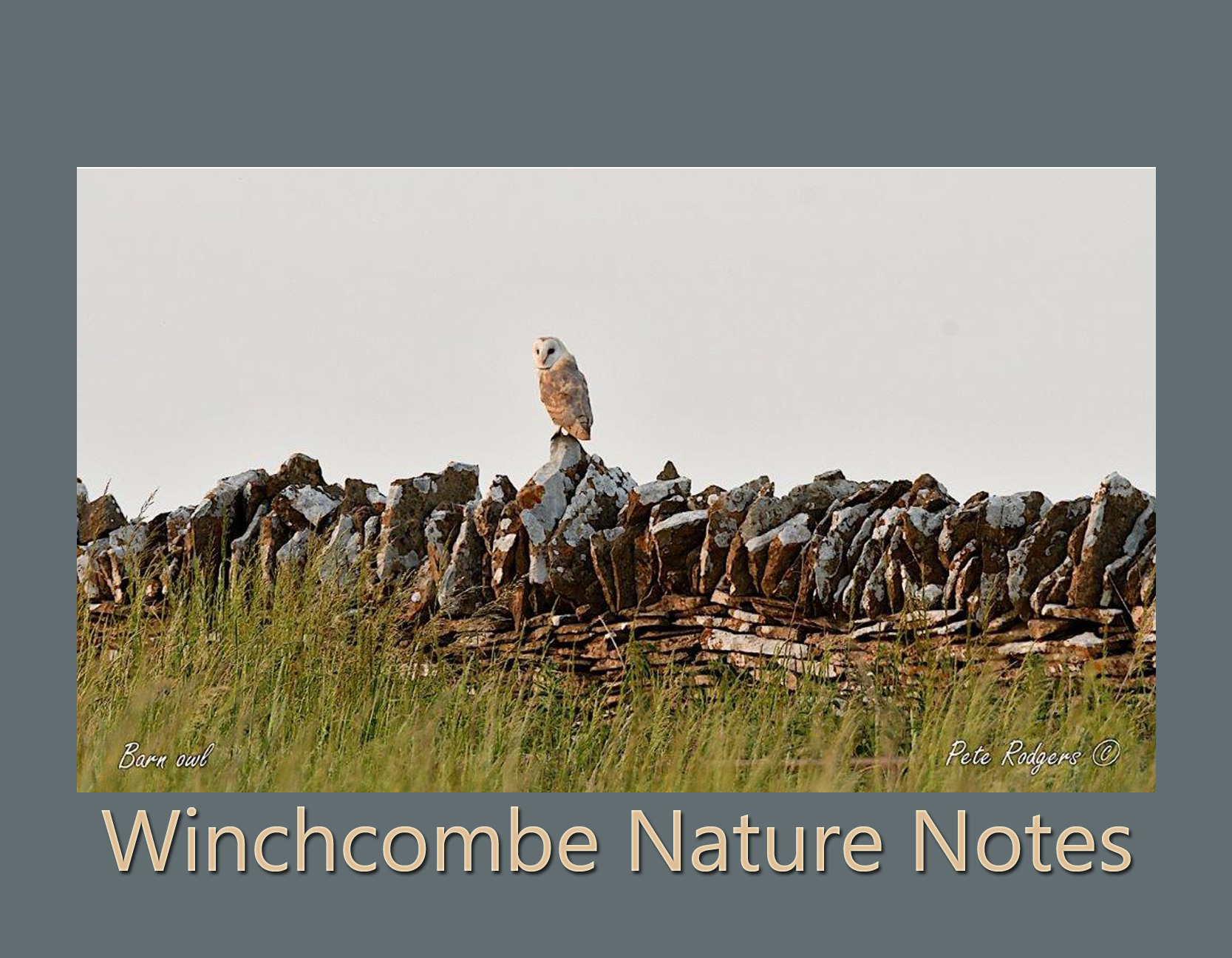 Winchcombe Nature Notes July