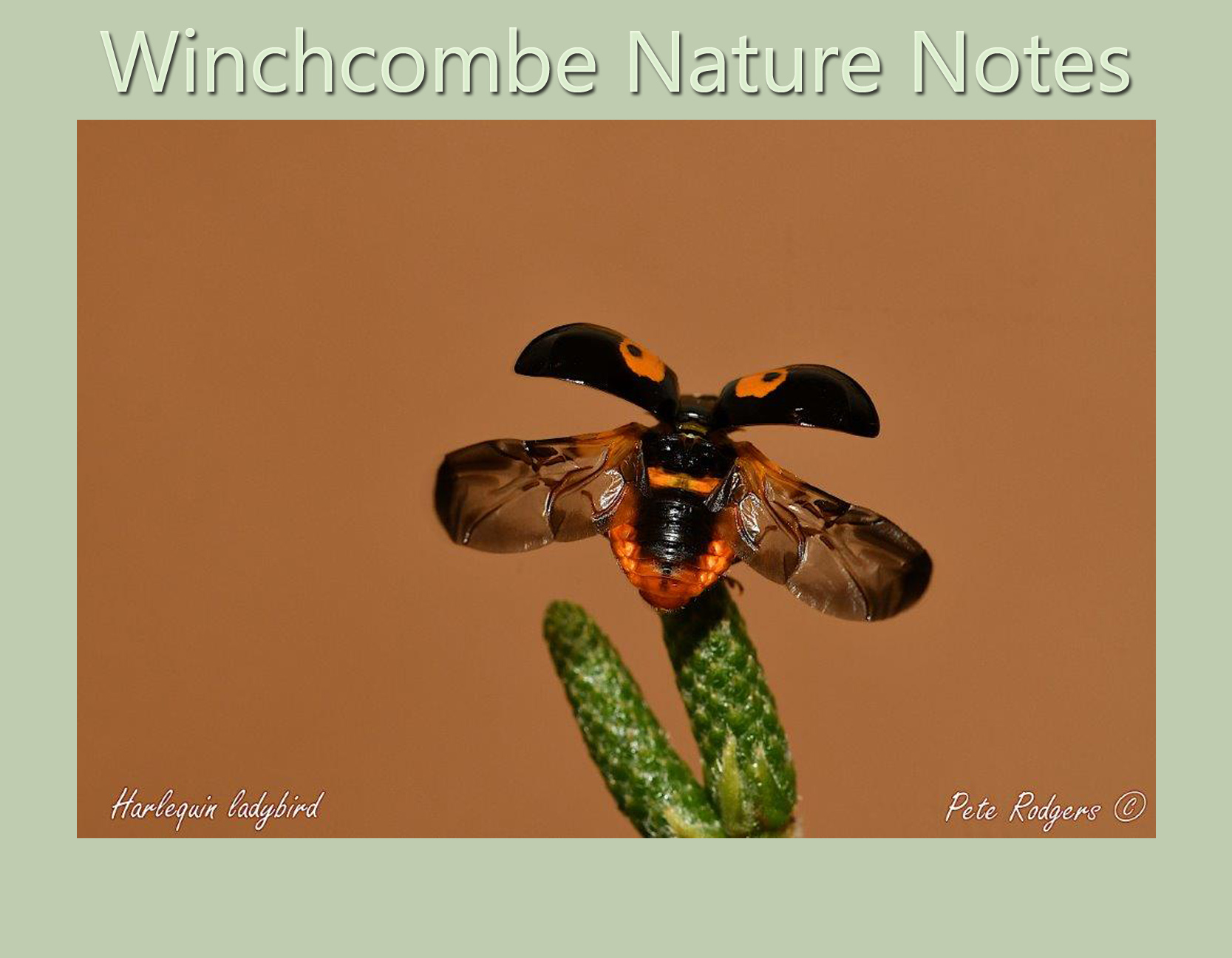 Winchcombe Nature Notes August