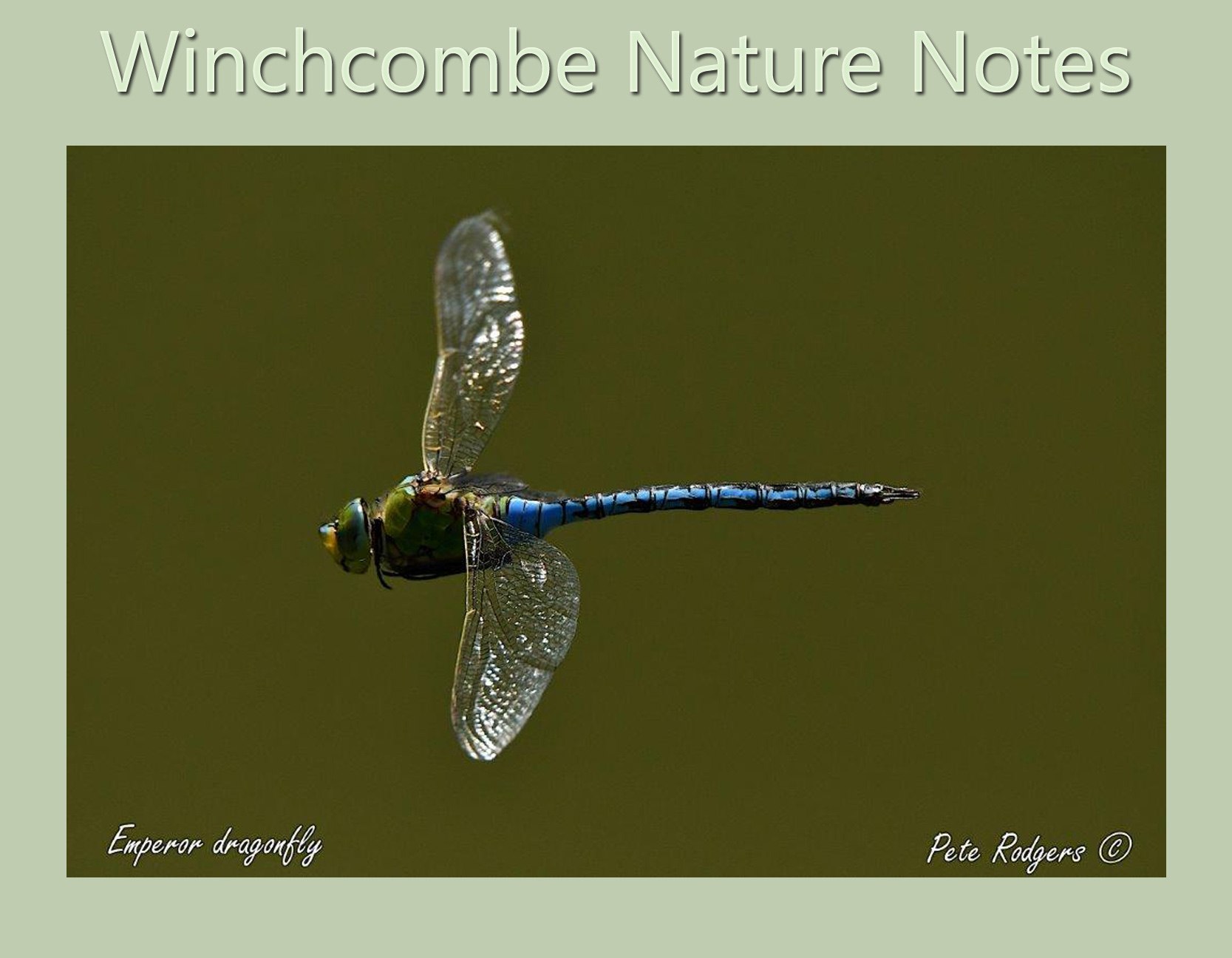 Winchcombe Nature Notes - September