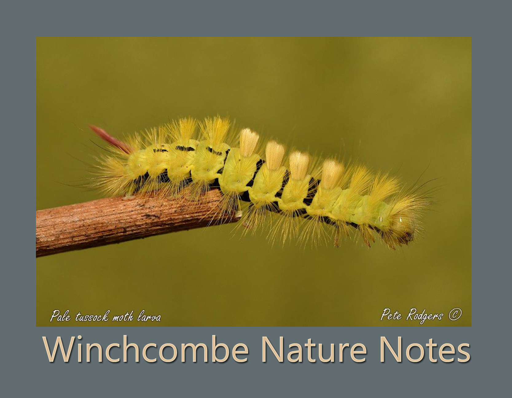 Winchcombe Nature Notes October