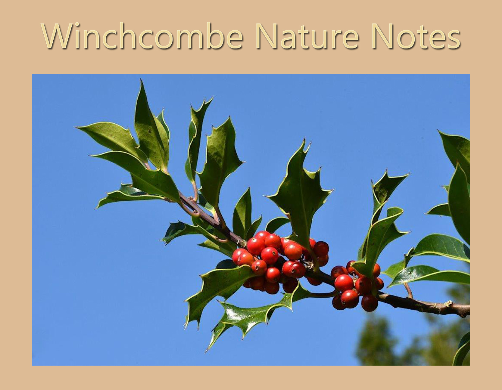 Nature Notes - December