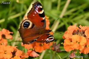 Winchcombe Nature Notes March