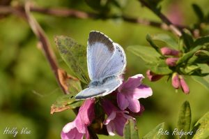 Winchcombe Nature Notes