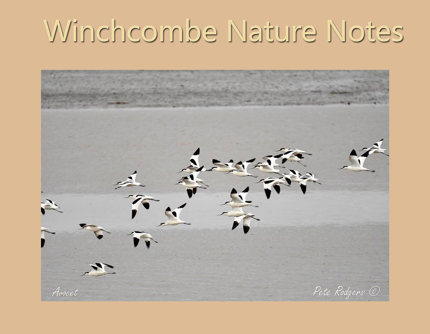 Nature Notes May