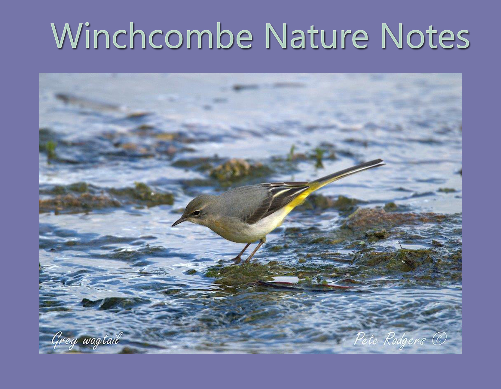 Nature Notes October
